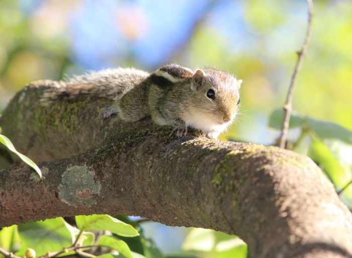 Squirrel perched on a branch in the sunshine