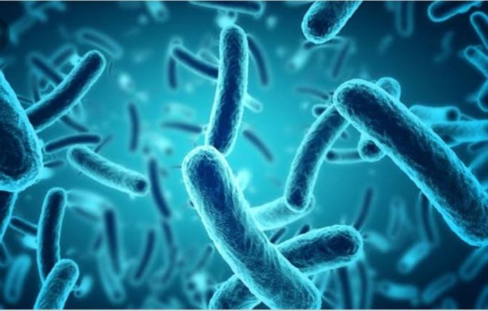 Micro organisms, rod shaped bacteria on electron microscopy