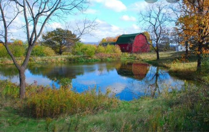 Pond in a farmhouse close to a red barn and fields